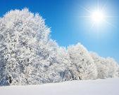 árboles de helado — Foto de Stock