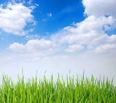 Grass and white clouds — Stock Photo