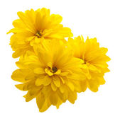 Yellow flower — Stock Photo