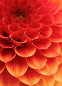 Abstraktní květy — Stock fotografie