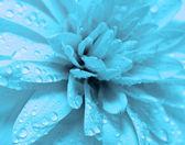 滴の花びら — ストック写真