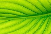 Close up leaf — Stock Photo
