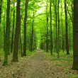 Green forest — Stock Photo #22788842