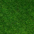 Background of a green grass — Stock Photo