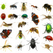 Set of insects — Stock Photo #24105121
