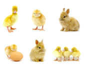 Easter collection — Stock Photo