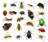Set of insects — Foto de Stock
