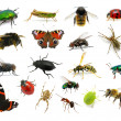 Set of insects — Stock Photo #24371381