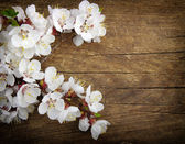 Blossom on wood — Stock Photo