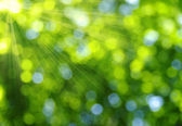 Green bokeh — Photo