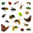 Stock Photo: Set of insects