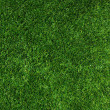 Texture green lawn — Stock Photo #25998687