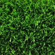 Texture green lawn — Stock Photo