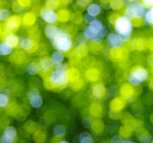 Green bokeh — Stock Photo