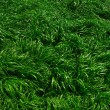Texture green lawn — Stock Photo #26987061