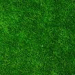 Texture green lawn — Stock Photo #28630979