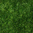 Texture green lawn — Stock Photo #30142511