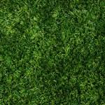 纹理绿色草坪 — 图库照片