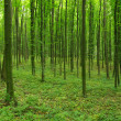 Stock Photo: Trees