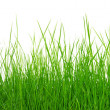 Grass — Stock Photo #31679015