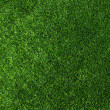Texture green lawn — Stock Photo #32397729