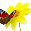 Foto Stock: Butterfly and flower