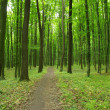 Green forest — Stock Photo #32399935