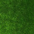 Texture green lawn — Stock Photo #33972691