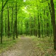 Green forest — Stock Photo #33973409