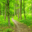 Green forest — Stock Photo #33973715
