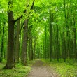 Green forest — Stock Photo #33976297
