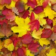 Stock Photo: Fallen autumn leaves