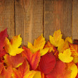 Autumn leaves on wood — Stock Photo