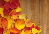 木材に紅葉 — ストック写真