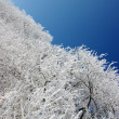 Stock Photo: Frosted trees