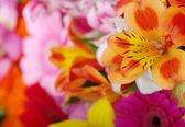 Bakgrund av blommor — Stockfoto