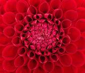 Closeup květ — Stock fotografie