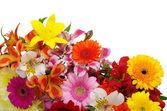 Tło w kwiatki — Zdjęcie stockowe