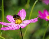 пчела — Стоковое фото