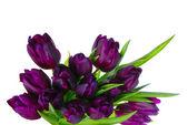 Bouquet of tulips — Stock Photo