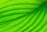leaf texture — Zdjęcie stockowe
