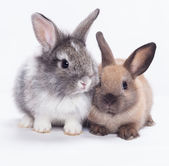 Two rabbits — Stockfoto