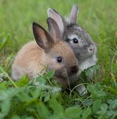 Rabbits in grass — Stock Photo