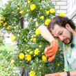 Tired man cutting the rose — Stockfoto