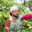 Man cutting the peony flowers — Stock Photo