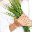 Green wheat ears in the hand — Foto de Stock