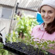 Stock Photo: Woman with seedlings in the garden