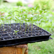 seedlings in the garden — Stock Photo