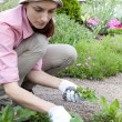 Young woman working in the garden bed — Stock Photo