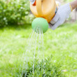 Hands watering bush — Stock Photo #13363954